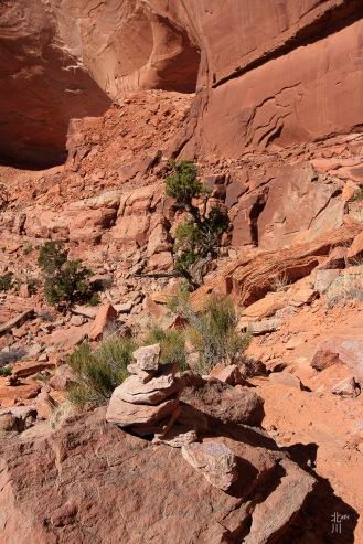 Trail? What Trail?!?