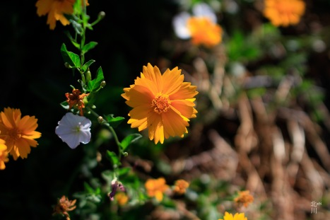 Simple Orange Flower with the sun making the colors pop!