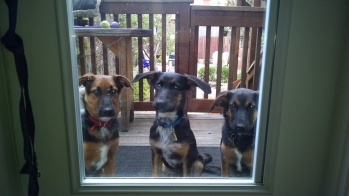 HEY! You gonna let us in?